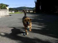 散歩20100925-2