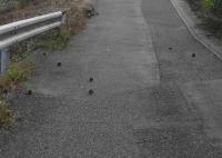 散歩20100925-3