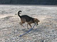 散歩20100925-5