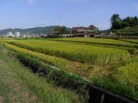 散歩20100927-3