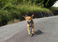 散歩20100928-1