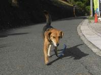 散歩20100928-2