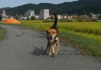 散歩20100928-4