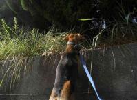 散歩20100928-5