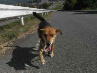 散歩20100929-2