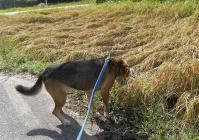 散歩20100929-4