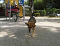 散歩20100929-5
