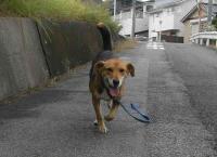 散歩20100930-1