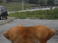 散歩20100930-3
