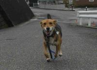 散歩20100930-4