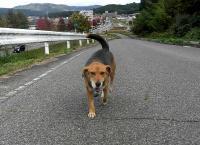 散歩20101027-1
