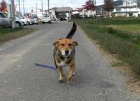 散歩20101027-2