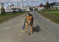 散歩20101027-4
