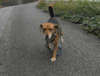 散歩20101028-2