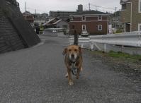 散歩20101028-4