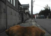 散歩20101028-5