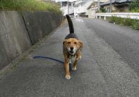 散歩20101029-2