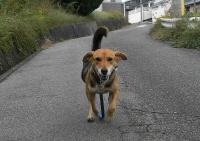 散歩20101029-3