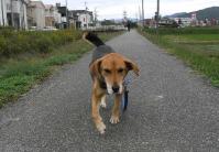 散歩20101030-4