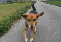 散歩20101030-5