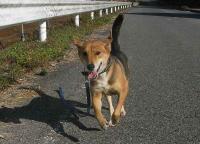散歩20101123-1