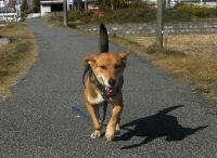 散歩20101123-2