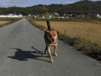散歩20101123-3