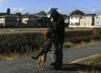 散歩20101123-4