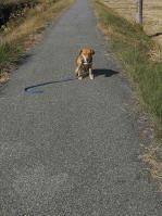 散歩20101124-4