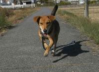 散歩20101124-5