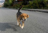 散歩20101125-1