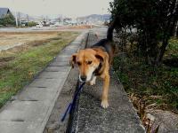 散歩20101125-2
