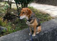 散歩20101125-3