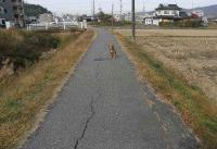 散歩20101125-4