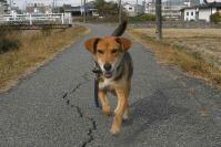 散歩20101125-5