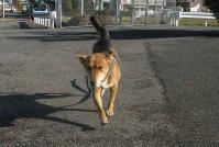 散歩20101126-2
