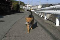 散歩20101126-3
