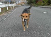 散歩20101128-1