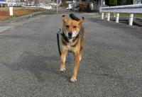 散歩20101128-2
