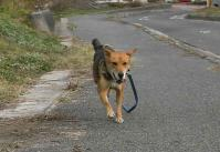 散歩20101128-4