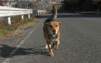 散歩20101129-1