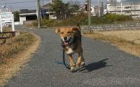 散歩20101129-2