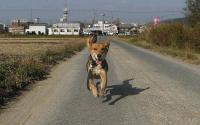 散歩20101129-3