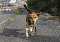 散歩20101130-1