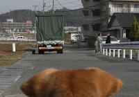 散歩20101130-2