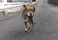 散歩20101130-3