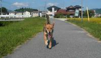 散歩20110927-2