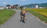 散歩20110927-3