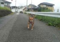 散歩20110929-1