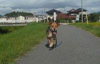 散歩20110929-3